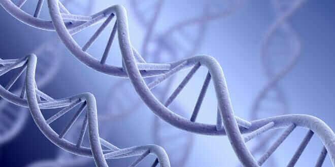 A DNA strand. (Shutterstock)